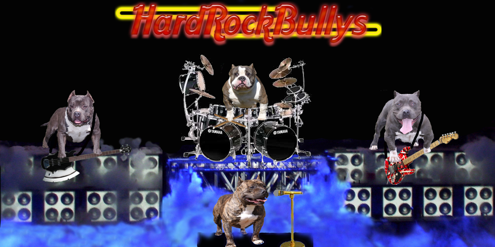 HardRockBullys Sales Information for the American Bully Pitbull Puppies For Sale